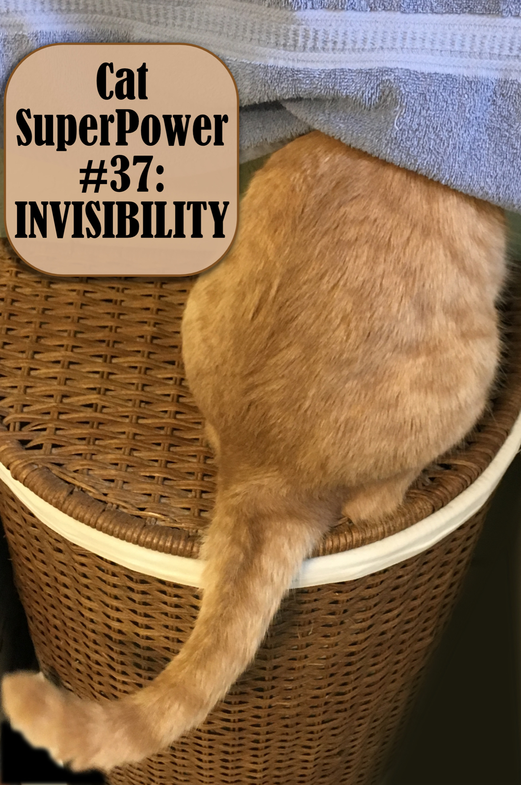 Cat-Superpower #37: Invisibility