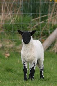I was wrong. Now I'm sheepish.